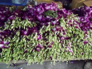Flower Market - Chiang Maia