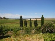 View from Coriole Winery, Adelaide
