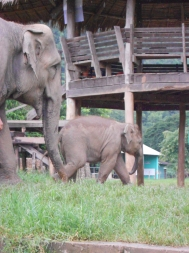 Elephant Sanctuary, Chiang Mai