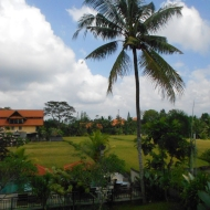 Rice Fields and Pool View from my Room, Ubud, Bali