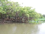 Corroboree Billabong, Australia