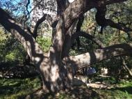 The Alamo Gardens, San Antonio