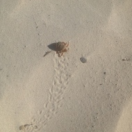 Tiny Hermit Crab, Tulum Beach, Mexico
